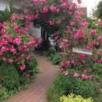 Gartenträumereien