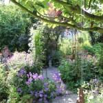 Eingewachsener Garten